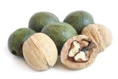 Green and ripe walnuts Royalty Free Stock Photo