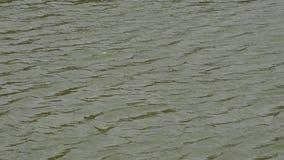 Green ripples. stock video