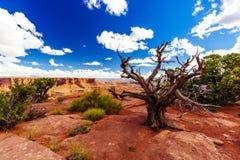 Green River обозревает, Canyonlands, национальный парк, Юта, США Стоковое фото RF