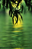 Green River Imagem de Stock
