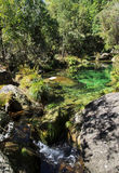 Green river. Clear river in green florest Stock Images