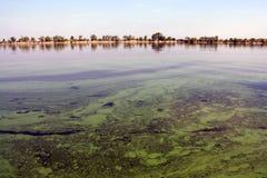 green river Obraz Stock
