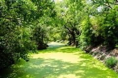 Green River Imágenes de archivo libres de regalías