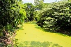 Green River Fotografía de archivo libre de regalías