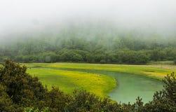 green river Fotografia Stock