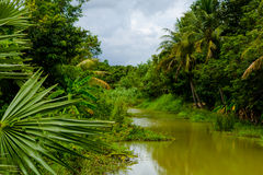 Green River alla foresta tropicale Immagine Stock Libera da Diritti