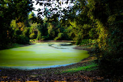 Green River in Angkor, Cambogia Fotografie Stock