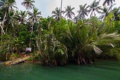 Green River Bank in Philippinen Stockfotografie