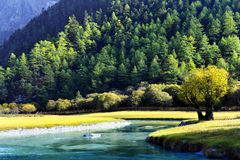 Green by the River. The both sides of the river was a small yellow-green prairie. The shades of green coniferous woods on the mountain was very hierarchical Royalty Free Stock Image