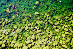 Green river bottom. Silence green river bottom and water weeds royalty free stock image
