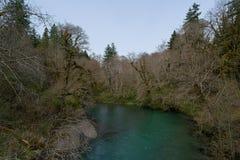 Green River en bosque imágenes de archivo libres de regalías