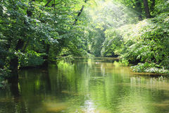 Green river in the forest Royalty Free Stock Photo