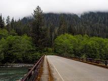 Green River i skog Royaltyfria Foton