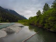 Green River im Wald Stockbild