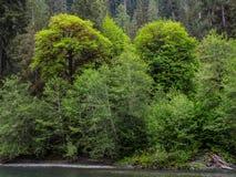 Green River im Wald Stockbilder