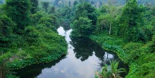 green river lasów Obraz Stock