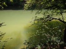 Green River mit Reflexionen der Bäume Stockfotos
