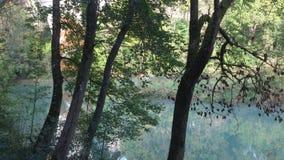 Green River och träd Arkivbilder