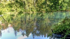 Green River och träd Arkivbild