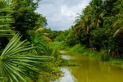 Green River på den tropiska skogen royaltyfri bild
