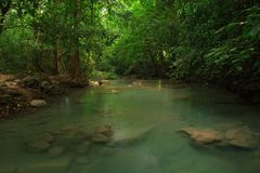 Green river in rain forest Royalty Free Stock Photography