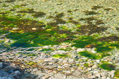 Green river seagrass Stock Image