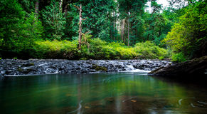 Green River. A small river flows through a forested canyon Royalty Free Stock Images