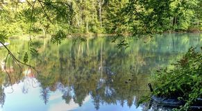Green river and trees. In the forest Stock Photography