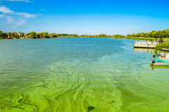 Green river waters with Algal bloom. Landscape with shallow lowland blooming river on sunny day Royalty Free Stock Image