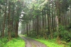 Green road. Royalty Free Stock Photo