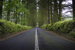 Green road Royalty Free Stock Photography