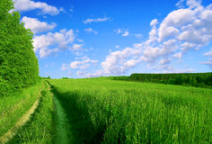 Green road. Royalty Free Stock Photos