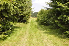 Green Road. The beauty of an Transylvanian villace in the Apuseni Mountains Stock Images