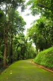 Green road Stock Image