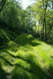 Green road through the forest. Road through a forest, overgrown by grass Stock Photo