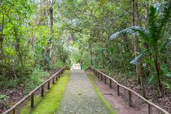 Green road in the forest, San Agustín Park, Huila Colombia stock photo