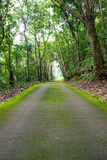 Green road and green tree in the forest Stock Photo