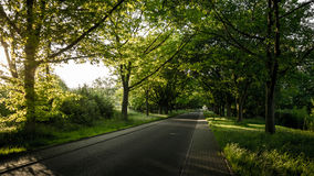 Green road Stock Photography