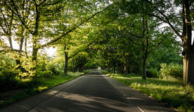 Green road Royalty Free Stock Photo