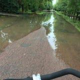 Green road after rain Stock Photos