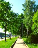 Green road. Summer road all green Royalty Free Stock Image