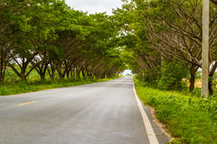 Green road with trees Royalty Free Stock Photo