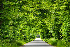 Green road tunnel. stock photos