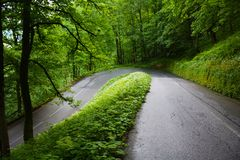 Green Roads in the woods royalty free stock photo