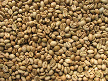 Green robusta coffee beans. From uganda Stock Photography