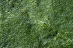 Green Rock Background III. Closeup of a green rock surface royalty free stock photo