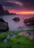 Green on the rock. Green rock on Beach samarra, Sintra, Portugal Royalty Free Stock Photo