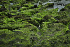 Green rock on coastline Royalty Free Stock Image