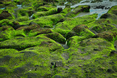 Green rock on coastline Royalty Free Stock Photo