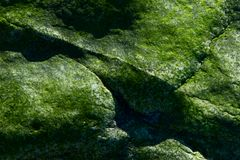 Green Rock IV. Green rock in detail with uneven surface royalty free stock photo